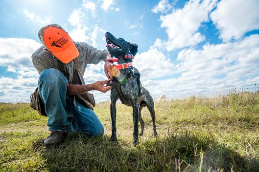 A hunter attaches a SafeShoot harness to a dog